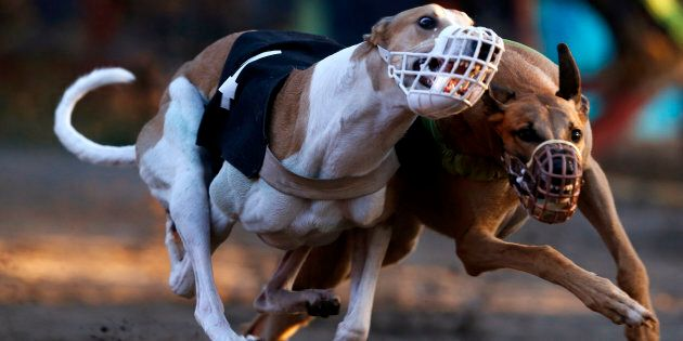 The NSW greyhound racing industry wants a ban lifted on the