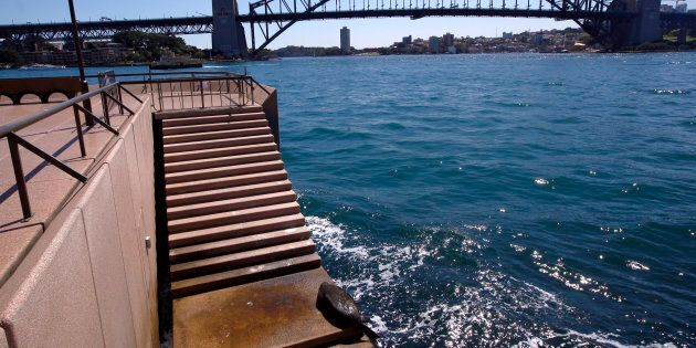 The Sydney seal lolls about on the steps of the Sydney Opera House.