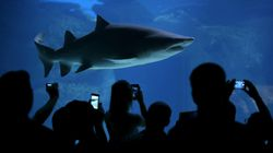 Get A Tweet To Find Out If There's A Shark Nearby Before You