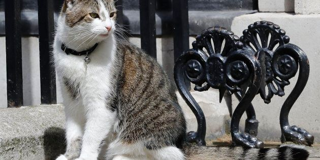 Larry, the Downing Street, watches over his