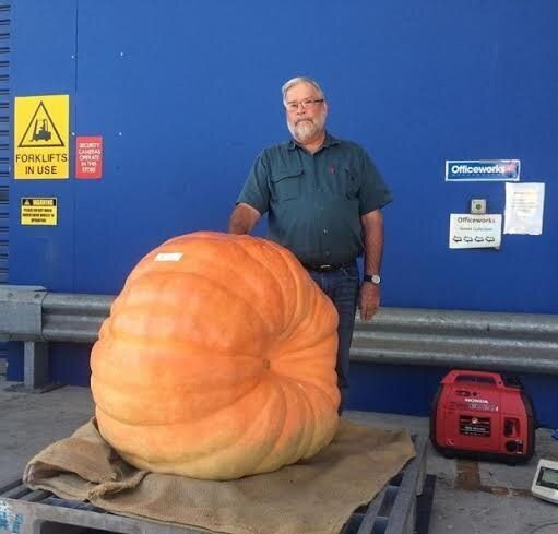 Jim's giant pumpkin weighed in at 184