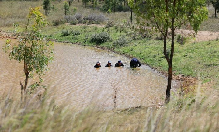 February 2015: Police divers perform a dam search on farm land near Calgaroo Avenue, where Ms McBride was last seen.