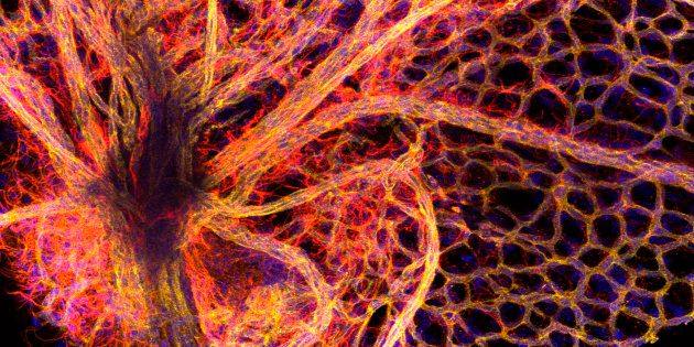 Part of the blood vessel network found in the retina of the