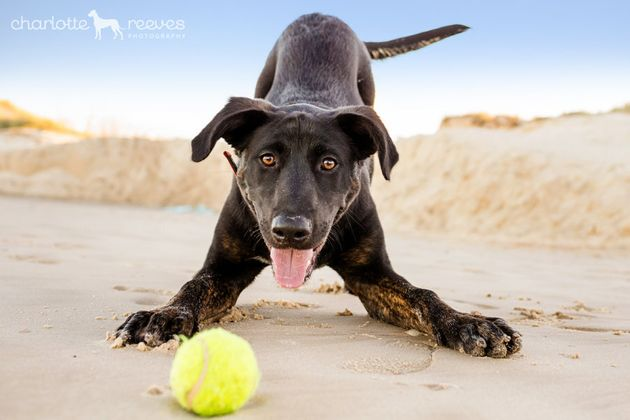 Pet lovers have created a niche market for photographers such as Brisbane's Charlotte