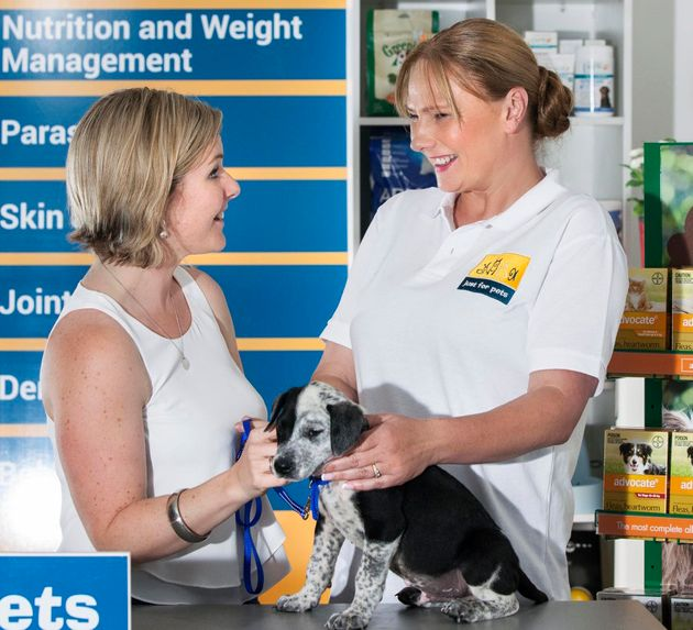 Pet owners are increasingly opting for preventative health checks rather than just taking their pets...