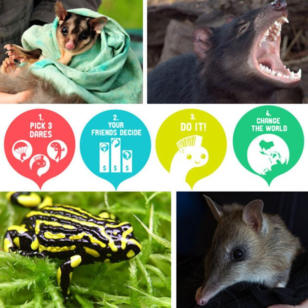 Proceeds from dare pledges goes to help save Aussie animals including the squirrel glider, Tasmanian...