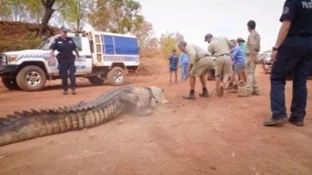 Look at the size of the croc, then look at the size of the truck behind