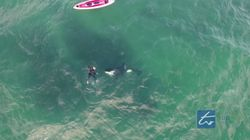 Kayaker Jumps In To Swim With Killer Whales In New