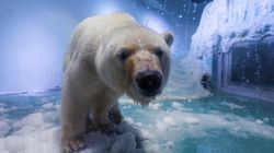 There Could Be Hope For The World's 'Saddest' Polar