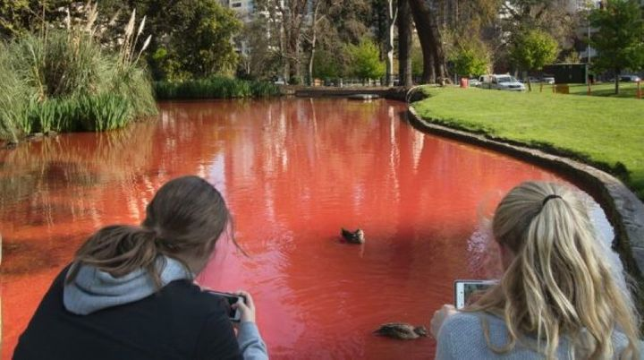 There's something in the water at Carlton gardens.