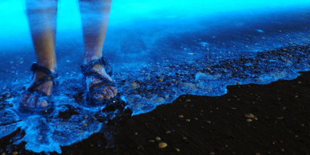 Bioluminescent algae. You're standing in