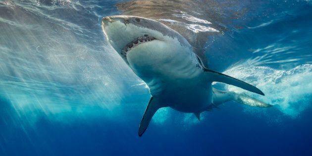 It's school holidays, summer's coming and people are talking about sharks.