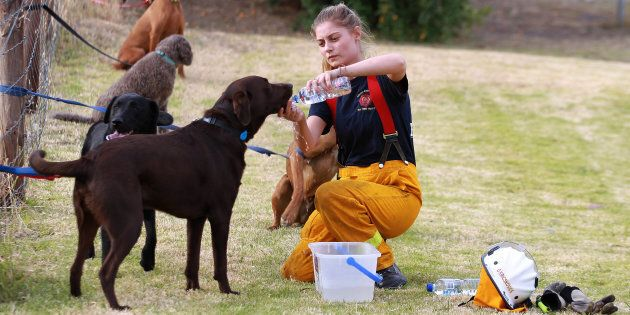 A fire plan is essential, even for your pets. Here pups are tendered to after fires swept South Australia...