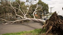 Gale-Force Winds In Victoria Leave One Woman Dead, Thousands Without