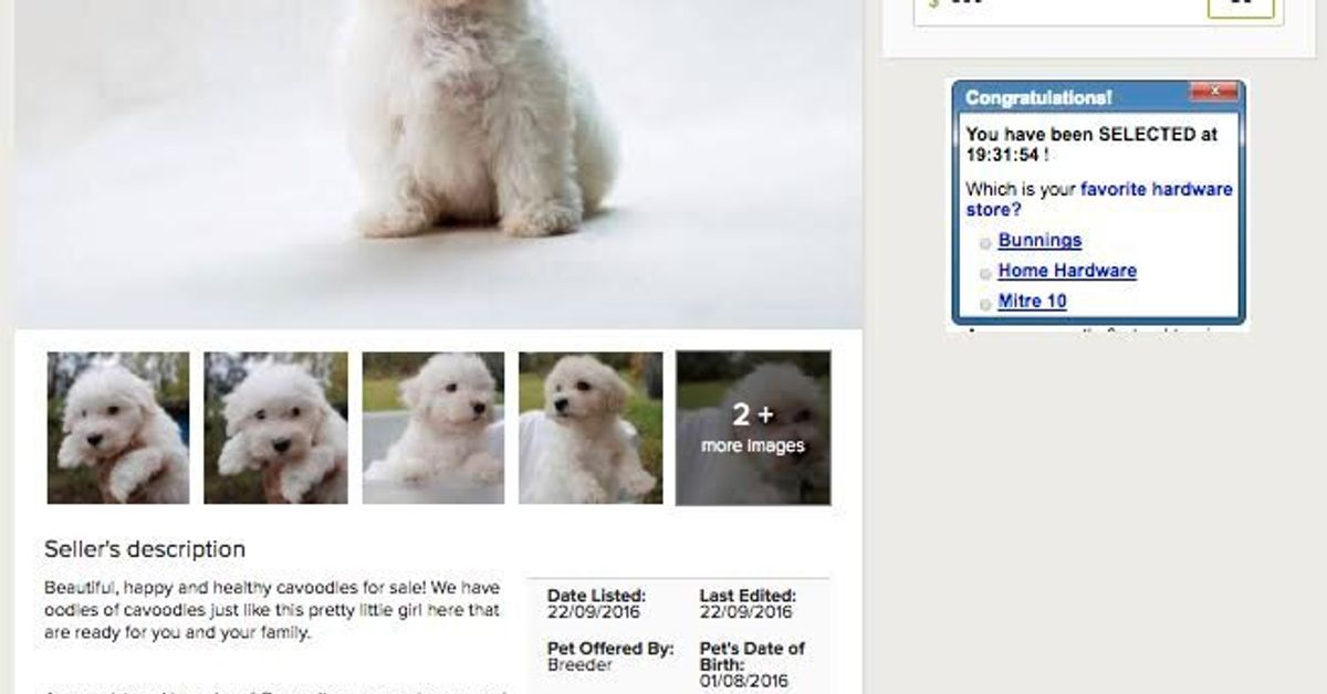 RSPCA Sets Puppy Sting On Gumtree To Catch Unsuspecting