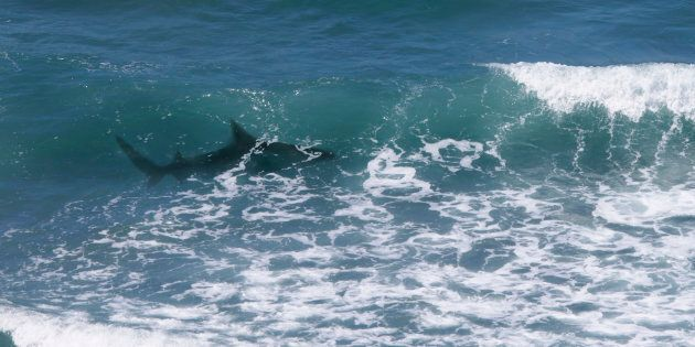 A man has reportedly been bitten by a shark near Byron Bay (file