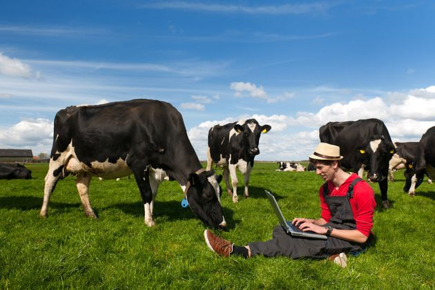Moo, me? Attaching billions of the world's cows to the internet of things to improve farming will require...