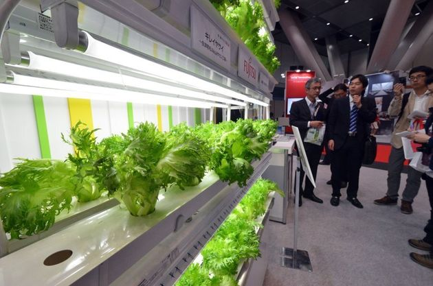 A display of Japanese computer giant Fujitsu's lettuce cultivation factory shown in Tokyo in 2014, shortly...