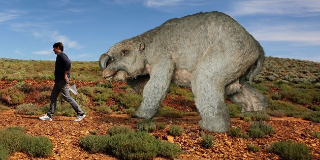 This is a diprotodon in the Flinders Ranges. Would you fight it?