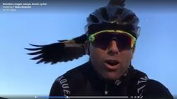 This Cyclist Was Attacked 13 Times By A Magpie And Totally Lost