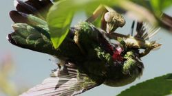 Praying Mantises Are Killing Birds And Eating Their Brains