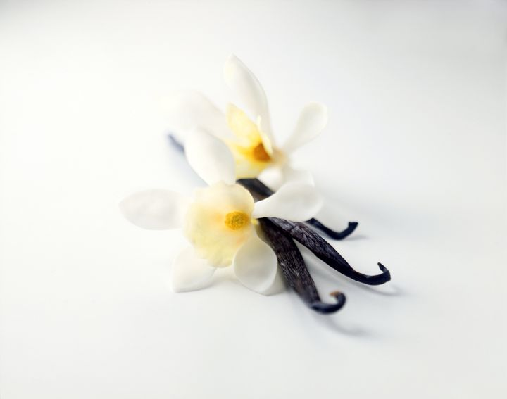 A vanilla bean is actually the pod of an orchid.