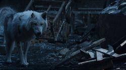 Pourquoi le loup de Jon Snow n'a pas eu de câlin dans le dernier épisode