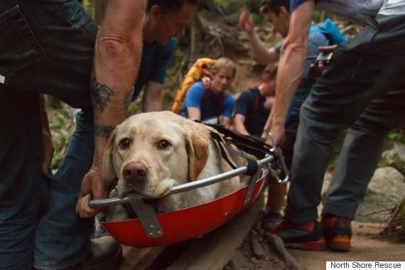 Dog Exhausted After B.C. Hike Gets Some Help From