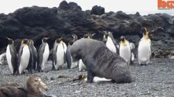 Rare Footage Shows Seals Forcefully Trying To Have Sex With