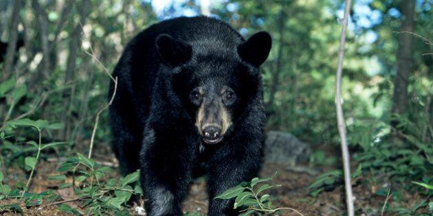 Suncor Bear Training Mandatory For All