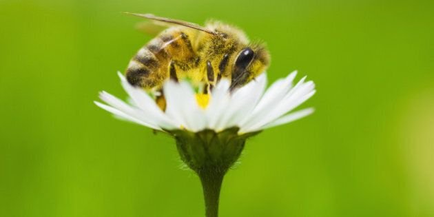 More Bad News for Bees: The New