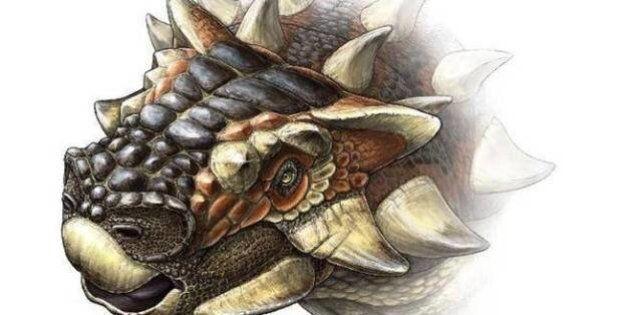 'Zaraapelta' Dinosaur Resembled Hedgehog With A Flamboyant