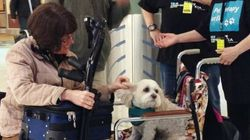 This Canadian Airport Has Brought In Dogs To Help Frantic