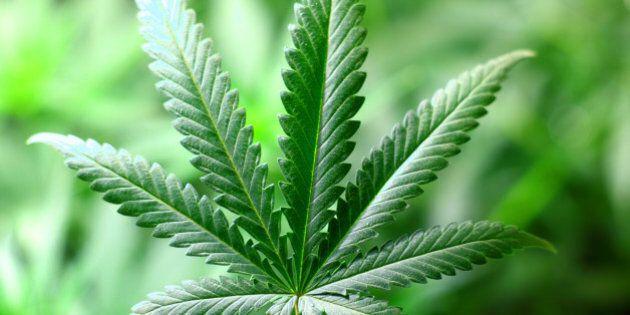 The Medical Marijuana Industry Needs a Code of