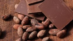 Sweet! Cocoa Could Prevent Memory
