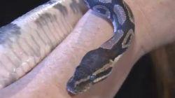 Snake Slithers Into Richmond
