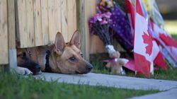 Fallen Soldier Nathan Cirillo's Dogs Wait For Master To