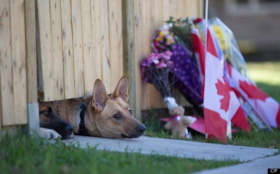 Nathan Cirillo's Dogs Wait For Master To Return