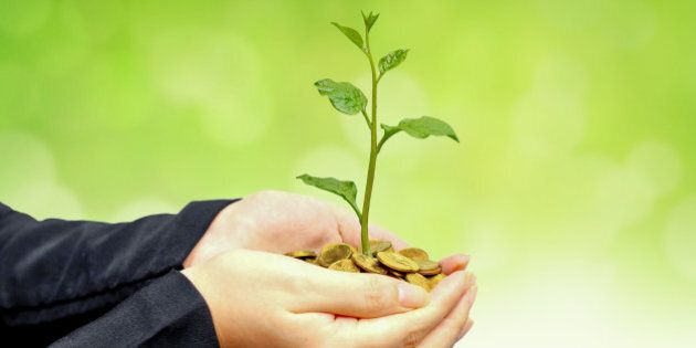 Hands of a businesswoman holding a tree growing on coins with green background - Business growth with...