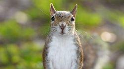 Squirrel Blamed For 4-Car Crash In