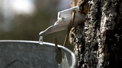Quebec's Over-Regulated Maple Syrup Industry Is Losing