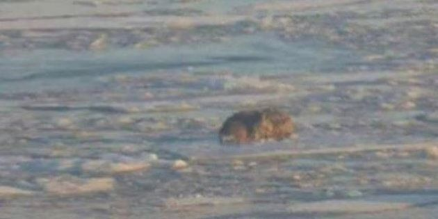 Photo Of Dog Stranded On Ice In Quebec Sparks Cries For Help