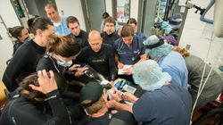 Dolphin Undergoes Breakthrough Surgery In