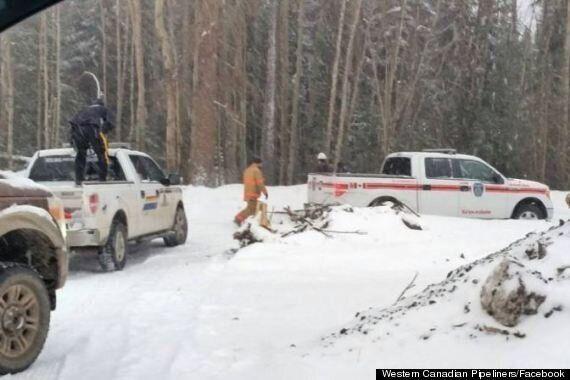 Cougar Attacks Pipeline Worker Near Grande