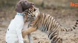 This Unlikely Animal Friendship Will Make You Forget All About