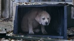 WATCH: The Super Bowl Ad That Panders To Every Dog