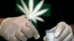 Vancouver Has More Medical Pot Dispensaries Than Tim