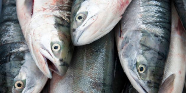 Farming Salmon On Land Is Possible, Project