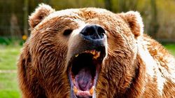 Grizzly Kills Yukon Woman After Invading