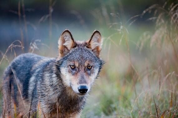 The Big Bad Wolf and Other Lies Kids Don't Believe